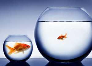 制度信用と一般信用の違い